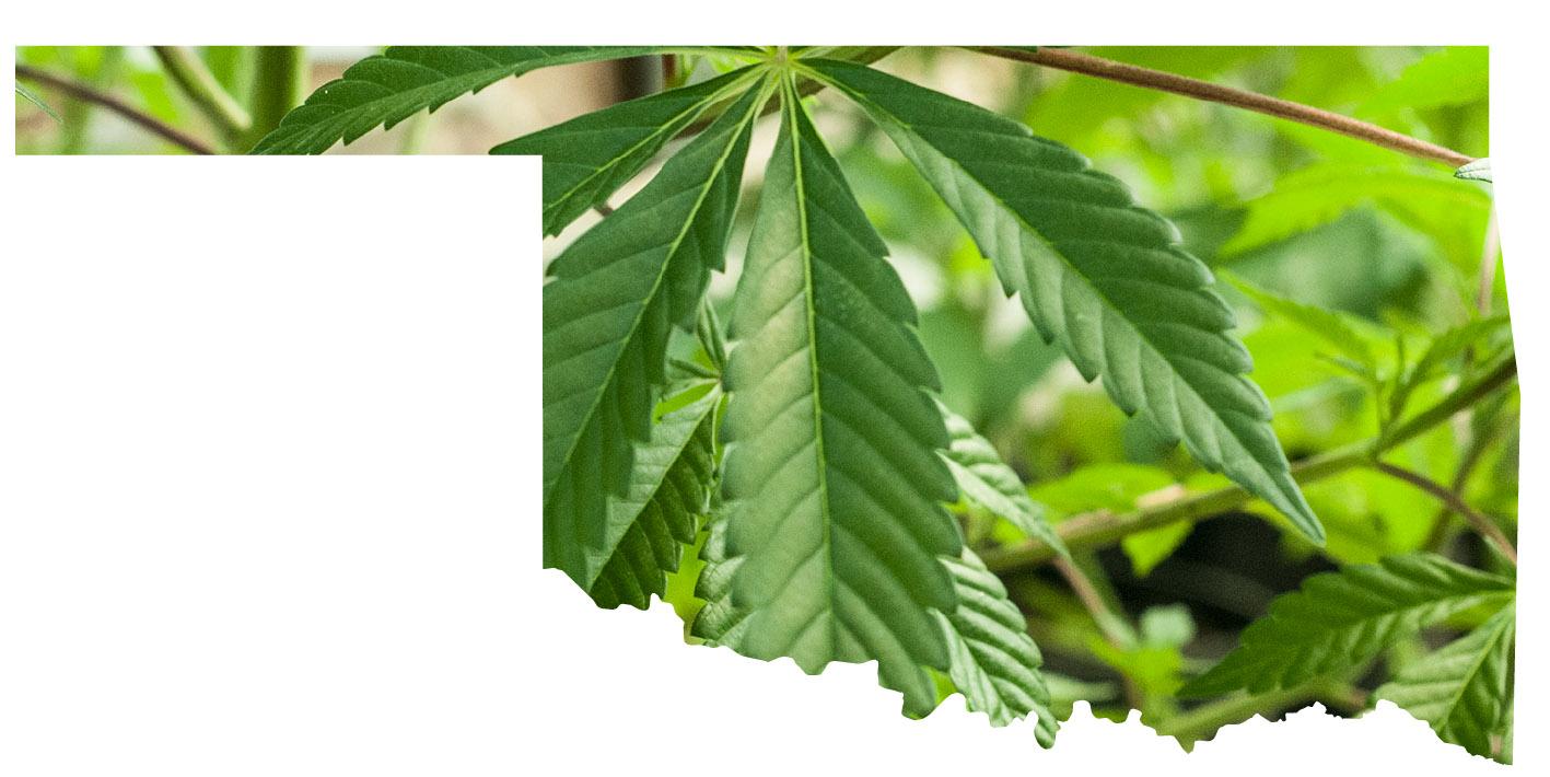oklahoma marijuana dispensary credit card processing
