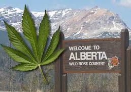 Alberta CA Marijuana Credit Card Processing, Merchant Accounts